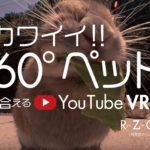 超カワイイ!! 360°ペット-動物-と触れ合える YouTube VR動画!!